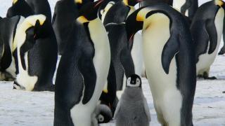 Linux-Kernel 5.0: ZFS kämpft mit GPL